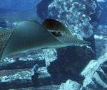 Аномальные предметы на дне океана