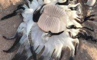 Неизвестное океанское существо