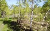 Аномальные деревья